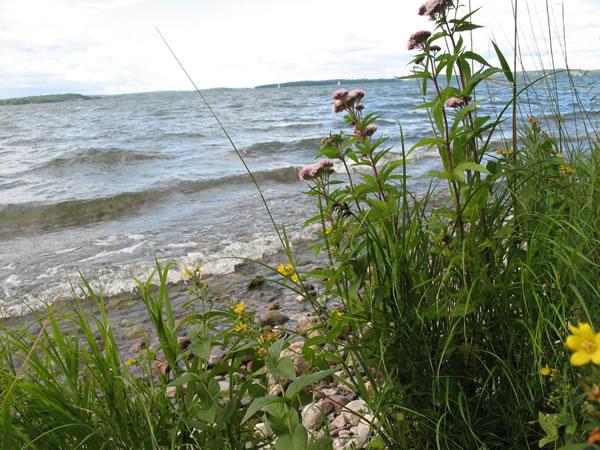 Adelsö, Foto Karin Ek