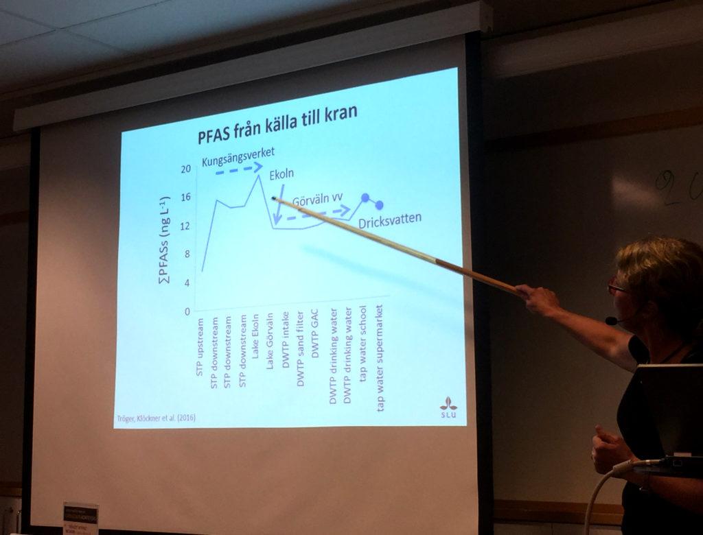 Karin Wiberg visar figur med halter av PFAS